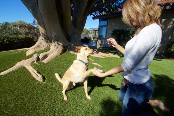 Homepage-Synlawn-Pet-Dog-Artifical-Turf